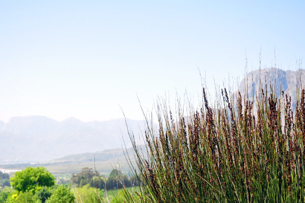 Cape Town's Big Five Wine Regions