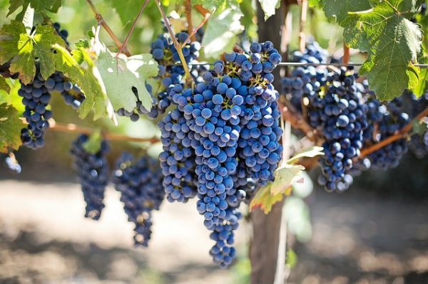 Road Trip in Chile - Wine Regions