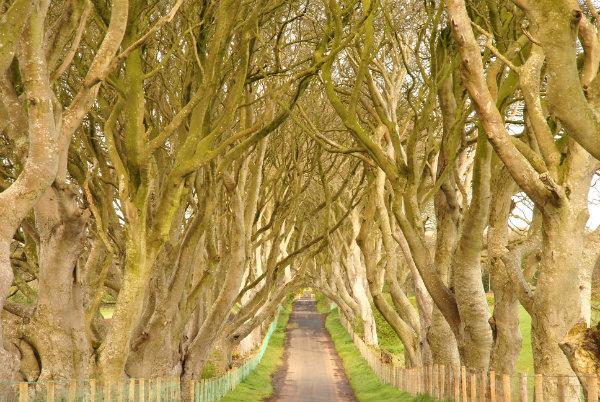 Fairytale Ireland - Dark Hedges