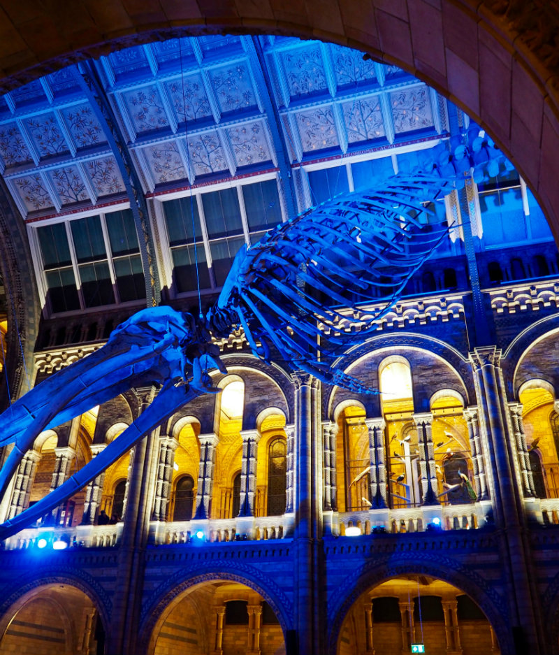 Crime Scene Live at the Natural History Museum: Review