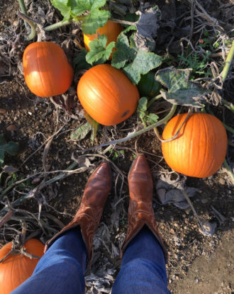 Boots and pumpkins in pumpkin patch: Pumpkin Picking in Kent